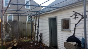 In order to do the gutters I had to hack down my grape vines and climbing roses off the garage trellis. This is the backyard spring clean up in progress.