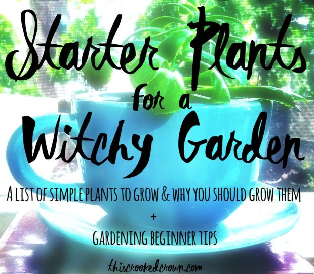 Starter Plants for a Witchy Garden by This Crooked Crown